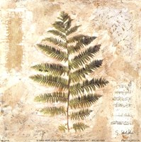 Sokol-hohne - Decorative Fern II Fine Art Print