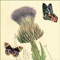 Field Thistle Fine Art Print