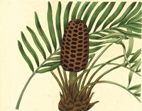 Palmetto III Framed Print