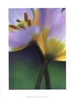 Tulipe 7 Fine Art Print