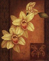 """Cymbidium Orchid II by Debbie Cole - 8"""" x 10"""""""