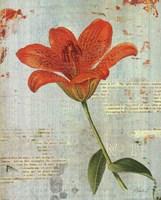 "Spring Lily I by Katie Pertiet - 16"" x 20"", FulcrumGallery.com brand"