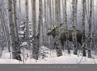 A Walk in the Woods Fine Art Print