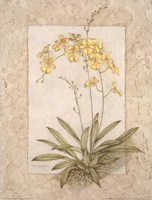 Orchid Fresco IV(L) Fine Art Print