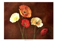 Poppy Perfection I Fine Art Print