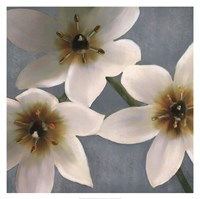 "30"" x 30"" Lily Pictures"