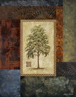 "Eucalyptus Tree I by Michael Marcon - 16"" x 20"" - $13.49"