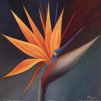 Bird of Paradise I Fine Art Print