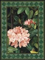 "Rhododendrum I by Elizabeth Tipton - 11"" x 14"""