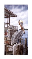 Pelican Key Framed Print
