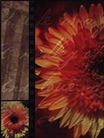 """Flower Collage I by John Jones - 12"""" x 16"""""""