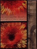"""Flower Collage II by John Jones - 12"""" x 16"""""""