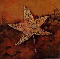 Catch a Star Fine Art Print