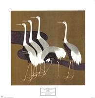 Cranes Fine Art Print
