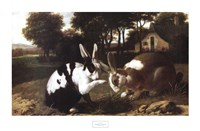 Two Rabbits in a Landscape Fine Art Print