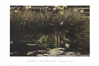 Water Garden Secret Fine Art Print