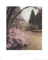 Azalea Way Framed Print