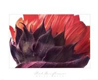 Red Sunflower Fine Art Print