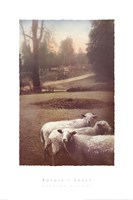 Ruthie's Sheep Fine Art Print
