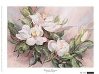 Magnolia Blossoms Fine Art Print