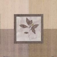 Leaf Spray l Framed Print