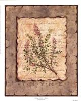Vintage Herbs - Thyme Fine Art Print
