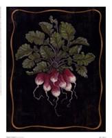 Bouquet Of Radishes l Fine Art Print