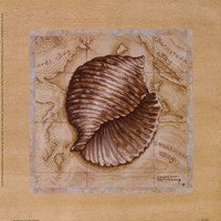 Sea Treasures I Framed Print