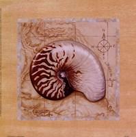 Sea Treasures II Fine Art Print