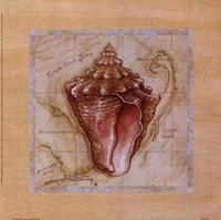 Sea Treasures III Framed Print