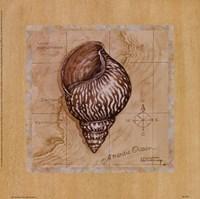 Sea Treasures IV Framed Print