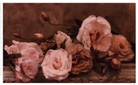 Palest Pink Fine Art Print