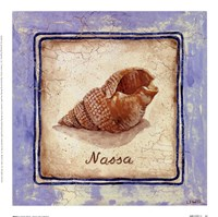 "Nassa by Sylvan Lake Collections - 9"" x 9"""