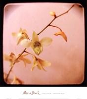 """Pink Sugar by Alicia Bock - 14"""" x 16"""""""