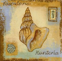 Fascidaria Hunteria Fine Art Print
