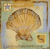 Lyropecten Nodosus Fine Art Print