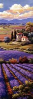 Fields Of Lavender I Framed Print