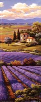 "4"" x 10"" Lavender Fields Pictures"