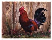 Bantie Rooster Fine Art Print