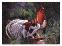 Red And White Rooster Fine Art Print