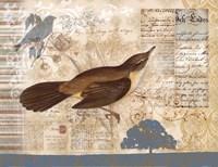 Bird Brained II Fine Art Print