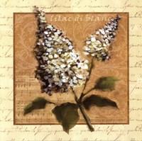 White Lilac Square Framed Print