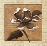 White Magnolia Square Fine Art Print