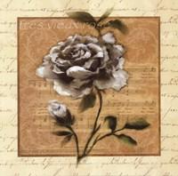 White Rose Square Fine Art Print