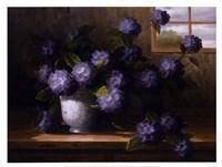Hydrangea Blossoms II Fine Art Print