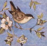 "Native Finch I by Susan Winget - 12"" x 12"""