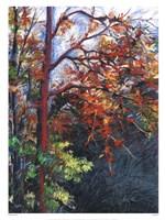 Frostfire Fine Art Print