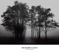 "Gathered Trees by Richard Calvo - 24"" x 21"", FulcrumGallery.com brand"