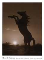 Rearing Horse Silhouette Fine Art Print