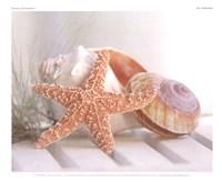 "Cali Starfish II by Gaetano Images inc.(guycali) - 11"" x 9"""